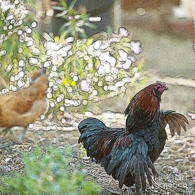 Mr. Rooster Struts Print by Artist and Photographer Laura Wrede