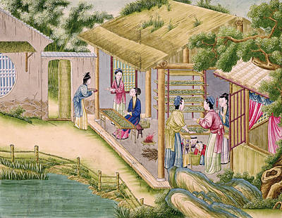 Ms 202 Fol.2  Learning About Silkworms, From A Book On The Silk Industry Gouache On Paper Print by Chinese School