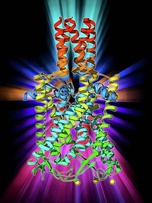 Molecular Structure Photograph - Mscl Ion Channel Protein Structure by Laguna Design
