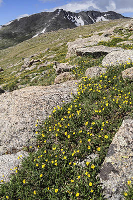 Spring Photograph - Mt. Evans Wildflowers by Aaron Spong