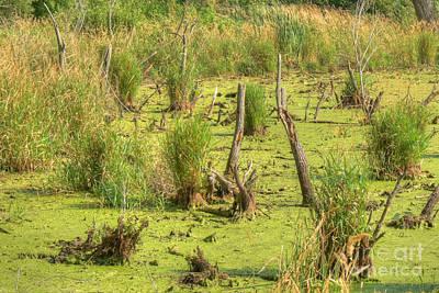 Marsh Photograph - Mucky Swamp by Deborah Smolinske