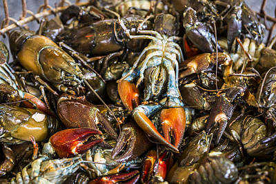 Crawdad Photograph - Mudbugs At The Market by Andrew Pacheco