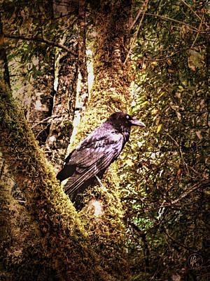 Muir Woods Raven 002 Print by Lance Vaughn
