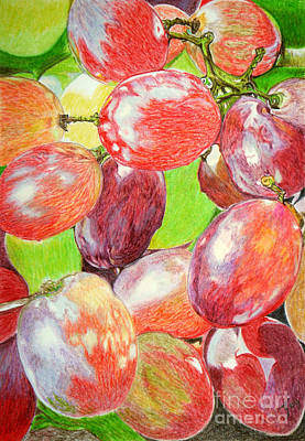 Merlot Drawing - Multi Coloured Grapes by Yvonne Johnstone