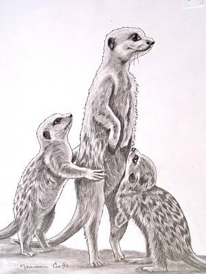 Meerkat Drawing - Mummy Please by Maureen  Crofts