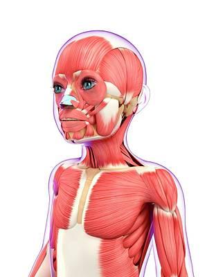 Muscular System Print by Pixologicstudio