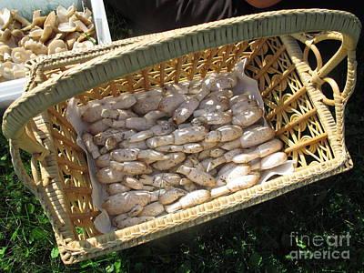 Mushroom Photograph - Mushroom Basket by Timothy Myles