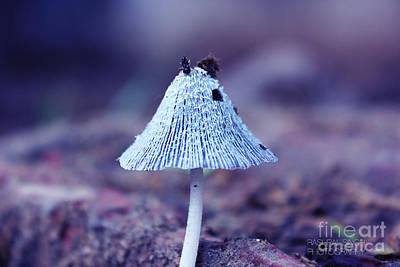 Mushroom Original by Rashpal Singh