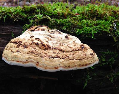 Mushroom16 Original by Jeff Klingler
