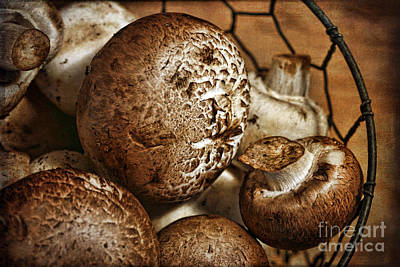 Mushrooms Print by Cindi Ressler