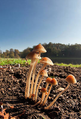 Mushrooms Growing Out Of The Soil Print by John Short