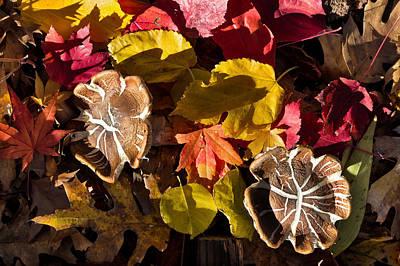 Fungal Digital Art - Mushrooms In Fall Leaves by Kathleen Bishop