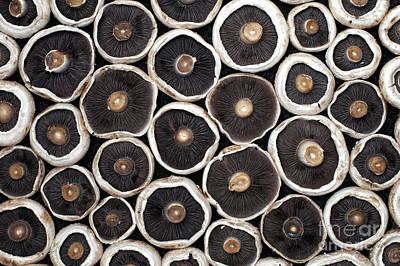 Mushroom Photograph - Mushrooms by Tim Gainey