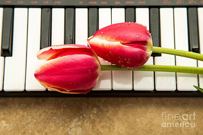 Keyboards Photograph - Musical Interlude by Edward Fielding