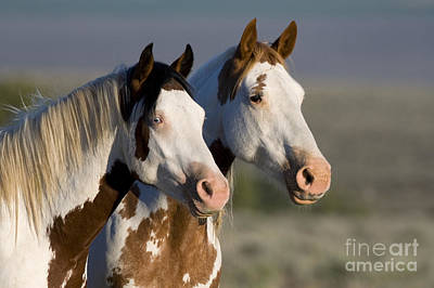Mustang Mare And Son Print by Jean-Louis Klein and Marie-Luce Hubert