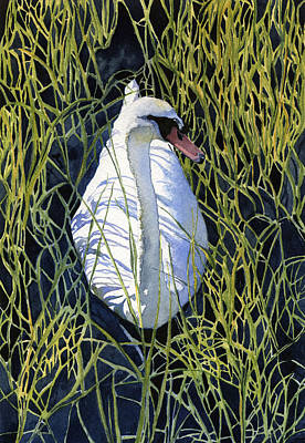 Swan Painting - Mute Swan by Heidi Gallo