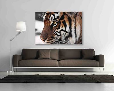 Architecture Photograph - My Ary Your Wall Tigress Two by Kandy Hurley