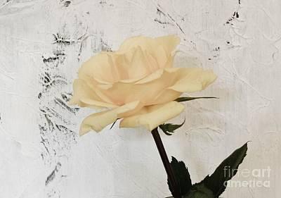 Wrap Digital Art - My Baby Yellow Rose by Marsha Heiken