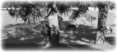 Horse Farm Maryland Photograph - My Back Yard Swing by Trish Clark