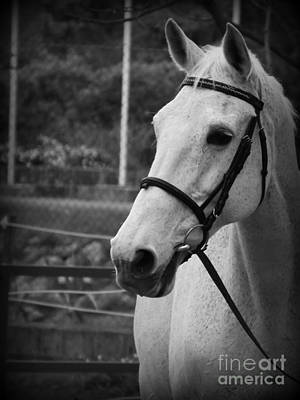 Eventing Photograph - My Best Friend by Clare Bevan