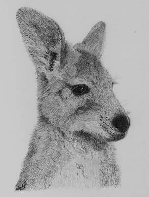 Kangaroo Drawing - My Duncan by Wendy Brunell