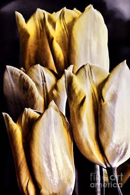 My Favorite Tulips Print by Mariola Bitner