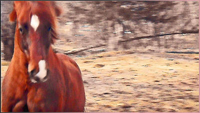 My Fine Friend The Flashy Chestnut Stallion Print by Patricia Keller