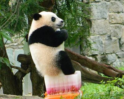 My First Birthday Cake - Bao Bao The Panda Print by Emmy Marie Vickers