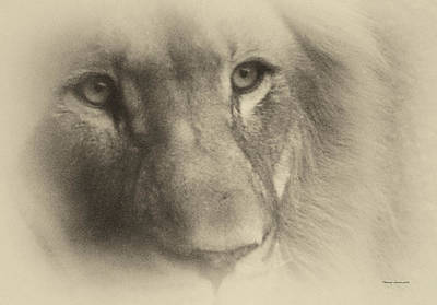 My Lion Eyes In Antique Print by Thomas Woolworth