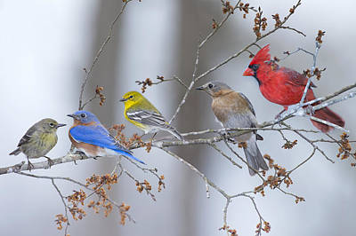 Warbler Photograph - My Neighbors by Bonnie Barry
