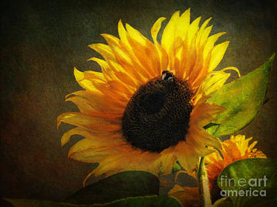 Sunflowers Digital Art - ...my Only Sunshine by Lianne Schneider
