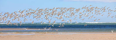 Flock Of Bird Photograph - My Tern by Bill Wakeley
