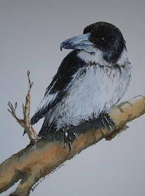 My Territory - Butcherbird Print by Jan Lowe