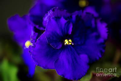My Violet I Print by Tamyra Ayles