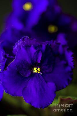 My Violet II Print by Tamyra Ayles