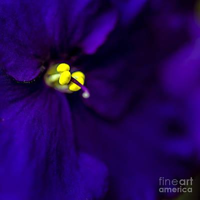 My Violet Iv Print by Tamyra Ayles
