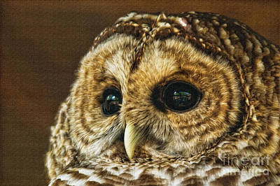 My What Big Eyes You Have Print by Lois Bryan