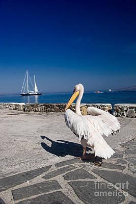 Mykonos Pelican Print by David Smith