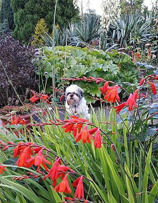 myLO the gardener Print by Val Byrne