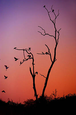 Mysterious Sunset With Solo Of The Tree And Choir Of Birds  Print by Jenny Rainbow