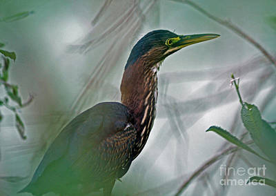 Mystery In The Marsh Print by Inspired Nature Photography Fine Art Photography