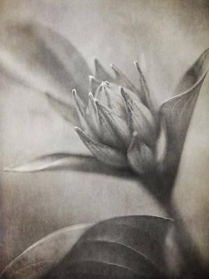 Grow Digital Art - Mystic Anticipation by Dale Kincaid