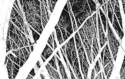 Mystic Forest Print by Steven Milner