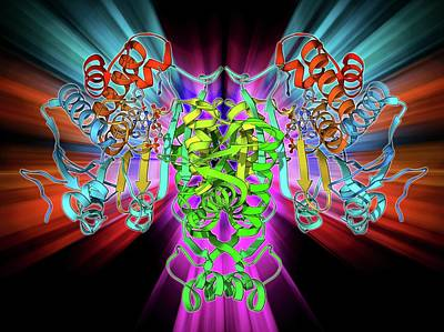 Molecular Structure Photograph - Nadp-dependent Isocitrate Dehydrogenase by Laguna Design