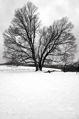 Valley Forge Photograph - Naked And Starving As They Are by Olivier Le Queinec