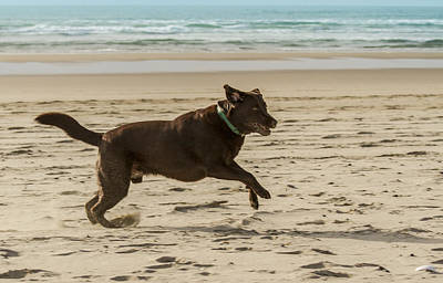 Chocolate Lab Photograph - Name Something More Fun Than This by Jean Noren