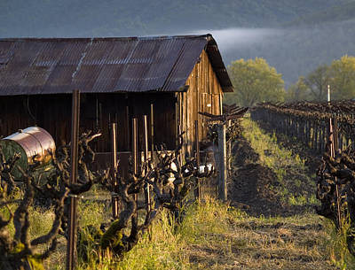 Vineyard Photograph - Napa Morning by Bill Gallagher