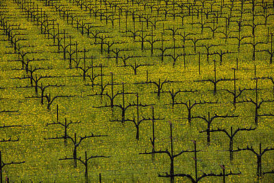 Vines Photograph - Napa Mustard Grass by Garry Gay