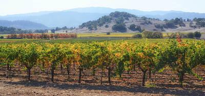 Napa Valley California Vineyard In Fall Autumn Print by Brandon Bourdages