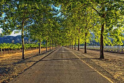 Grape Vines Photograph - Napa Valley Drive by Mountain Dreams